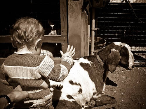 Child petting a goat